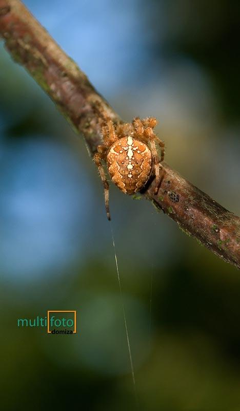 multifoto_przyroda_6